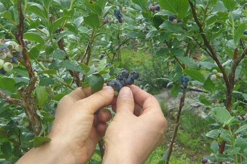Bberry2