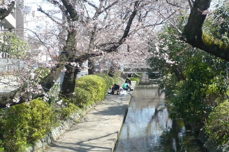 Sakura007